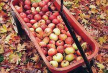 f a l l / My favorite season: fall