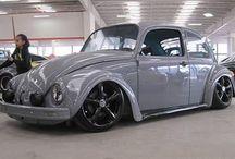 beetle colours