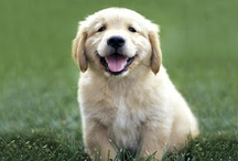Funny and cute dogs