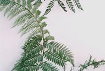 잎사귀아트
