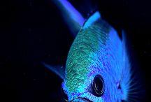 Kalat*Fish World