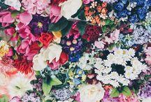. Floral