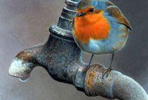 ptaki i inne stworzenia Boże / ptaki
