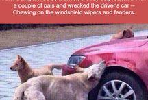 Revenge of the Dogs