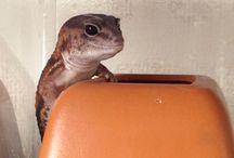 爬虫類 / 爬虫類画像を掲載