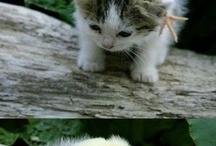 Cute!  / by Jessica Plowman