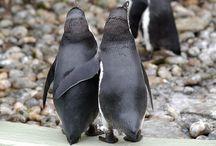 Favourite animals / Penguins