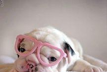 Cuties :)  / by Jenny Bartlett