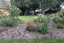 Water-wise Landscaping / by Halleck Horticultural