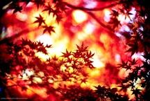 Autumn / by Little Melbourne