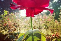 Dream Garden / Love to look at and plan flower gardens.