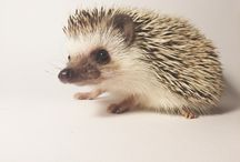 Hedgy