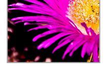 Flower Power in Mallorca / flowers Mallorca