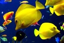 under the sea / All things hidden and aquatiac