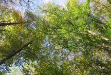 Natur / Bilder in der Natur