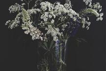 wild bouquets...