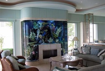 Aquriums of colourful fish / They bring serenity into your home