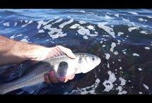 Fishing lure seabass