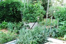 Veggie Patch / Here at Celestine Retreat we grow veggies and herbs for ourselves and the guests to pick from