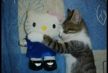 Cats & Critters  / by Becky Gilbert