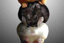 I think mice are very nice!