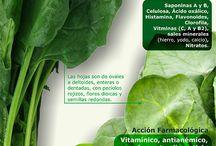 plantas propiedades