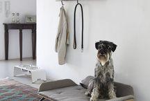 Cucce da interno per cani
