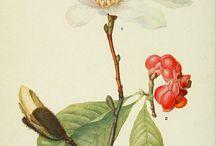 kukkiaja kasveja