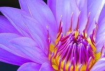 Flowers / by Cynthia Johnson