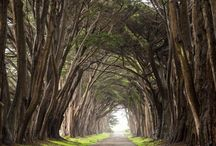 Point Reyes National Seashore,