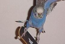 животные на скейте