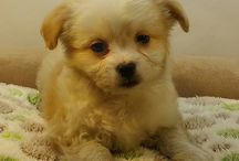 Puppies March 2016 / Puppies we have had during the month of March in the year 2016