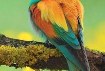 Vtáčiky