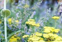 žlutý kytky