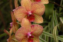 Orchids & Orchids ♥