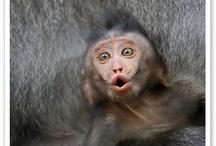 Apor och halvapor
