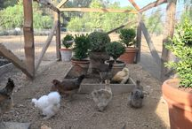 CHICKENOPOLIS AND GREENHOUSE