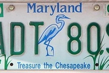 Bay Plates! / by Chesapeake Bay Trust