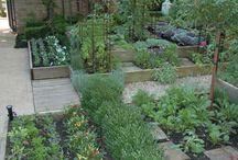 Herb and vegetable garden ideas