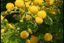 verde meridionale / tutto il verde ornamentale, spontaneo, agricolo che fa bello il meridione