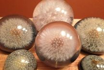 How to Make a Dandelion Paperweight – Dandelion Pa…
