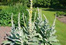 Herbal Remedies & Natural Living / Herbal remedies, natural healing, DIY health and beauty supplies