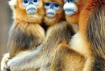 primates / by Leonie Lewis