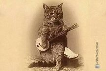cats / gatooooooooooos