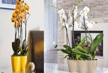 Orchideàk