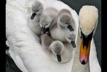Mamma& figli