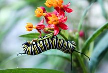 Butterflies-Dragonflies-Caterpillars
