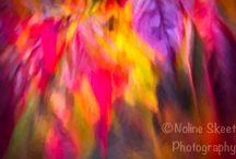 Autumn colours / Art photography
