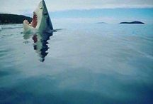 SHARKS / SHARKS