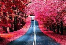 Beautiful / by Suni Ferrer
